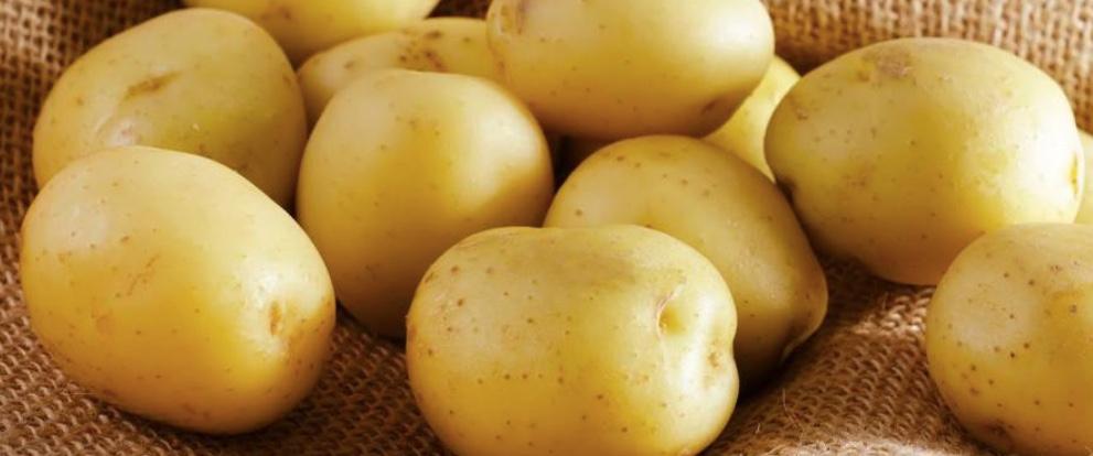 pomme de terre - choisir